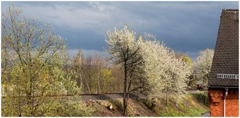 Frühling am Bahndamm