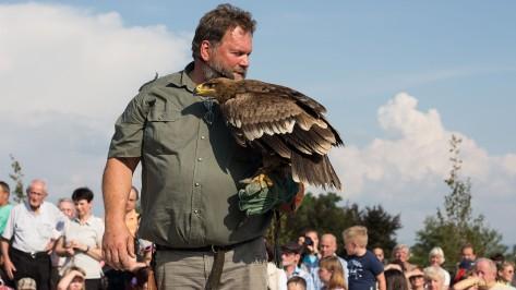 GreifvogelSchau am O-See II