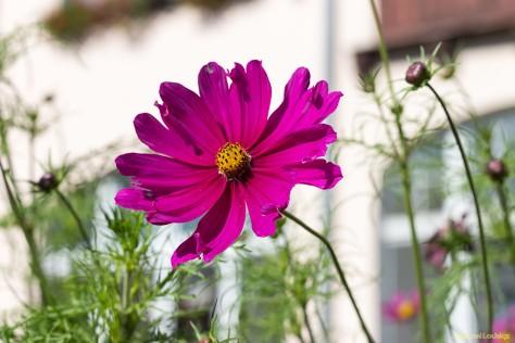 Nachbar´s Garten