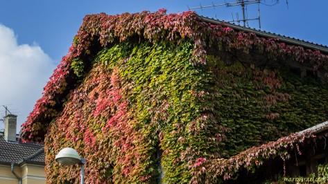 Hirtstraße 7 im Herbstmantel