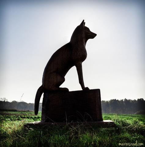 Der Wolf von Oberseifersdorf...