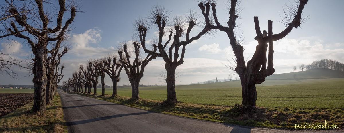 Der Greif von Großhennersdorf | Lindenallee